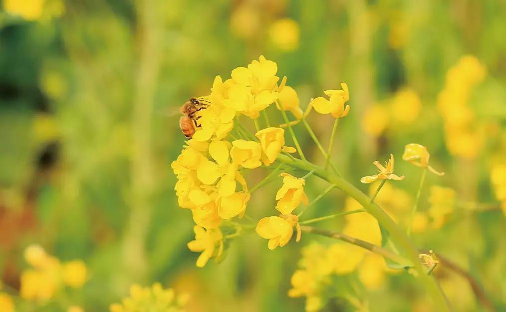 春天来了 这60句春日诗词带你走进嵩县的春暖花开