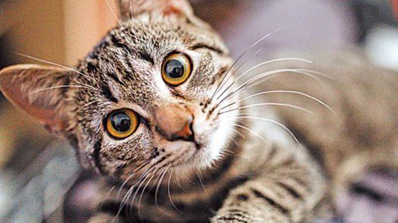 ?人生在線/貓的故事/葛 亮
