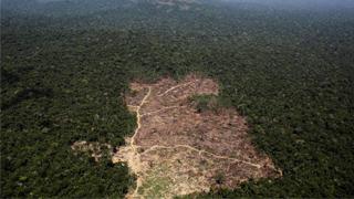 默克爾:出臺經濟刺激方案應考慮氣候保護問題