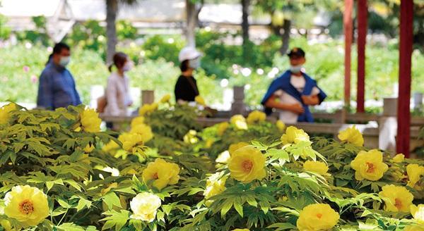 河南:省內游城市周邊遊人數環比大幅增長