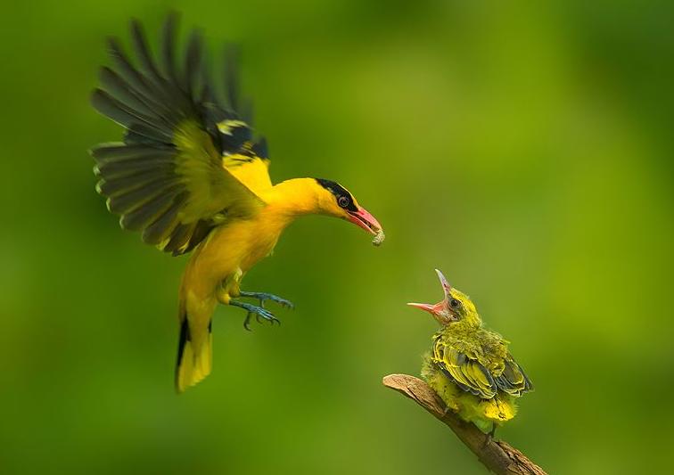 凝思杂记丨像鸟儿一样热爱生活,风雨兼程