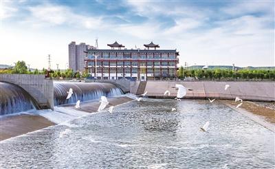 河南洛寧:生態環境好 鳥兒「扎堆」來