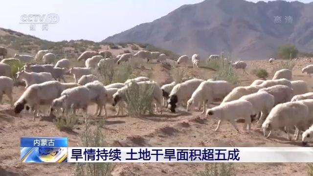 内蒙古旱情持续 土地干旱面积香港电视台本港台超五成