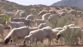 内蒙古旱情持续 土地干旱面积超五成
