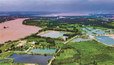 黃河濕地 夏景旖旎