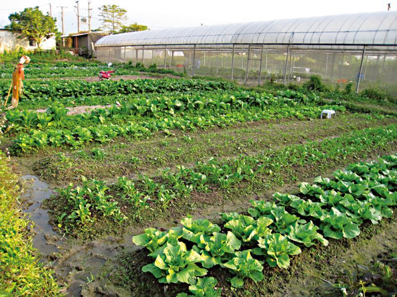 疫下反思\有机农业如何闢新天\大公报记者 汤艾加