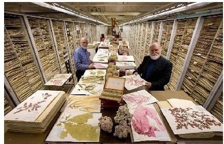 疫情致美博物館賣藏品求生