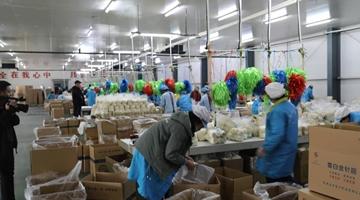 甘肃武威工厂化种植金针菇销全国