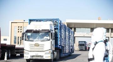 蒙古國3萬只捐贈羊全部抵達中國