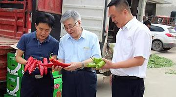 兰州:院士专家工作站助力农产品提质增效