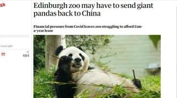 疫情让英国人养不起大熊猫了 考虑将它们送回中国……
