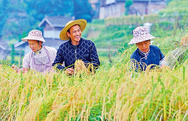 """?增产减碳/中科院揭秘水稻基因 """"低肥""""高产\大公报记者 周琳北京报道"""