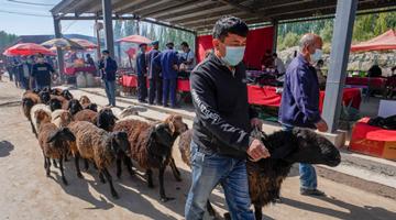 新疆數字經濟去年增長10% 占經濟總量26%