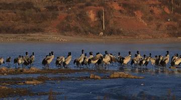 中国重点保护野生动物名录32年来首次迎来大调整