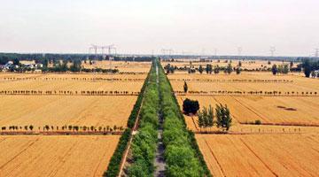 今年河南将建设高标准农田750万亩