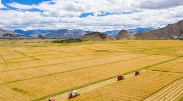 农业农村部:坚决完成全年1亿亩高标准农田建设任务