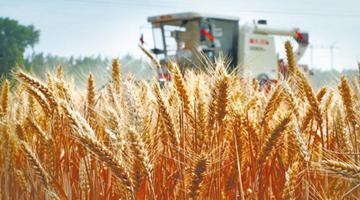 李克强:全面实施乡村振兴战略,促进农业稳定发展和农民增收