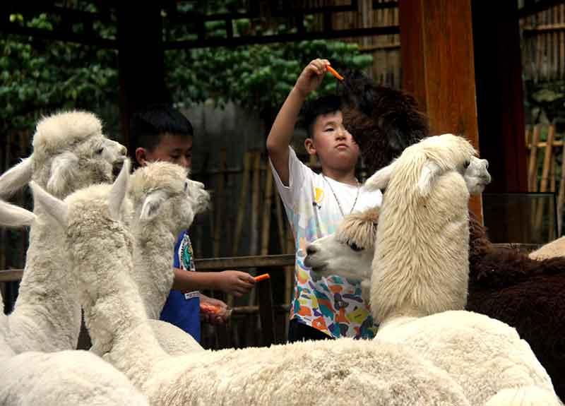 欒川竹海野生動物園:看国宝熊猫喂食東北虎与萌宠亲密互动