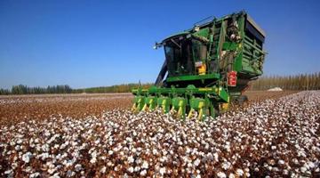 H&M、耐克们 对新疆棉花一无所知!