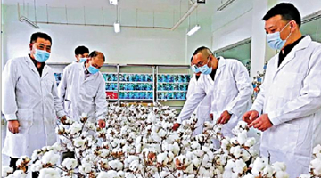 棉业中国标准正在制订 有望于今年上半年发布
