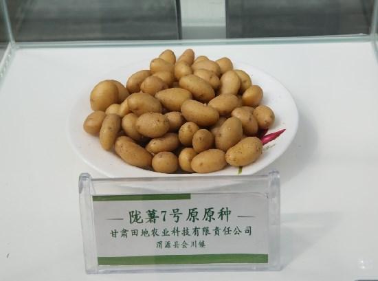 甘肃马铃薯依靠良种实现倍增