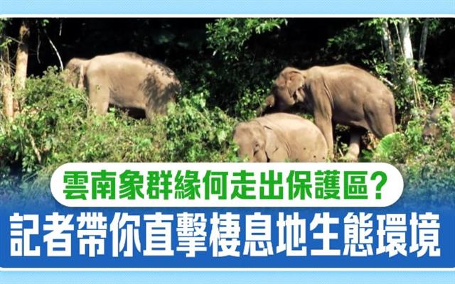 云南象群缘何走出保护区?记者带你直击栖息地生态环境