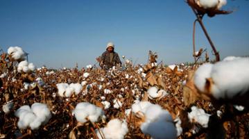 """新疆棉纺业:""""强迫劳动""""是美西方反华势力的谎言"""
