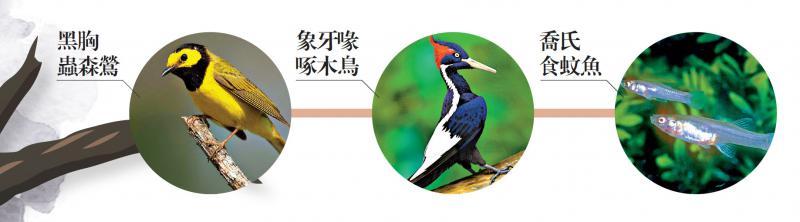 保护不力 美23物种永久性灭绝