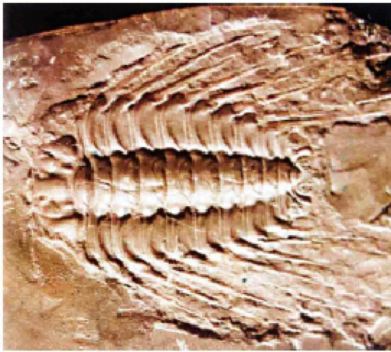 閒性閒情/古生代的化石\李英豪