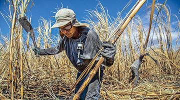 专家:全球暖化未来或致数百万工人受肾病威胁